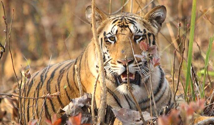 Nagzira-Wildlife-Sanctuary