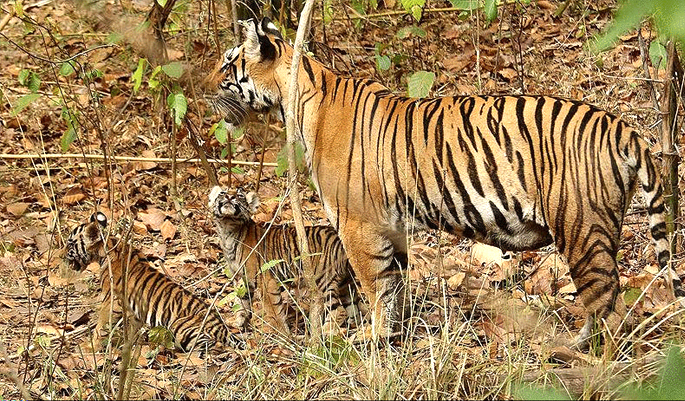 Pilibhit-Wildlife-Sanctuary