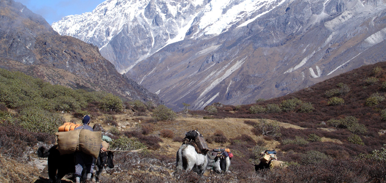 darjeeling-to-kanchenjuga