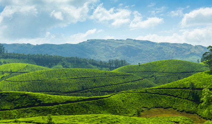 munnar-in-monsson