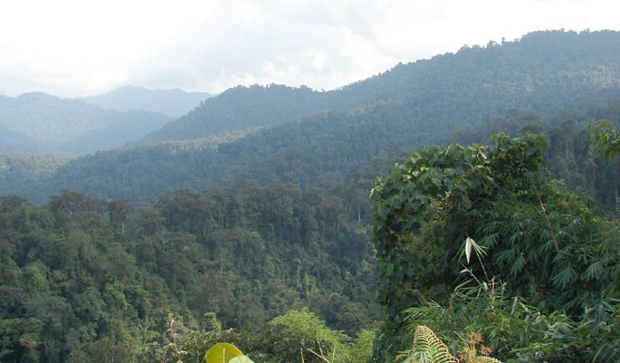 namdapha-national-park