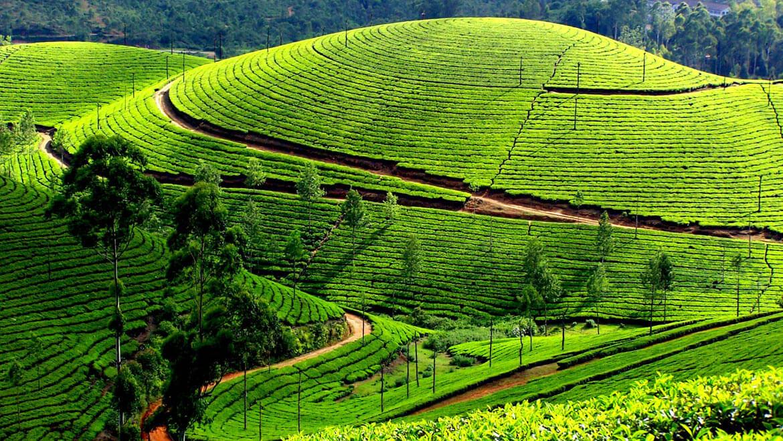 Top 10 Reasons to Visit Kerala in Monsoon Season