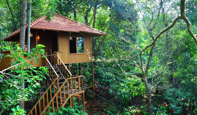 treehouse-wayanad