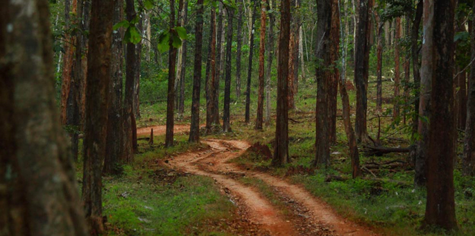 Anshi-National-Park