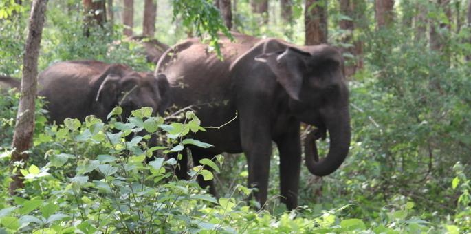 Dandeli-Wildlife-Sanctuary
