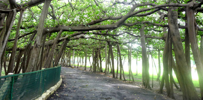 Great-Banyan-tree-Kolkata