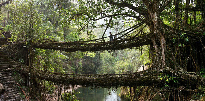 Living-Bridges