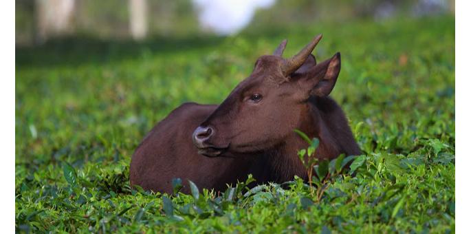 Mookambika-Wildlife-Sanctuary