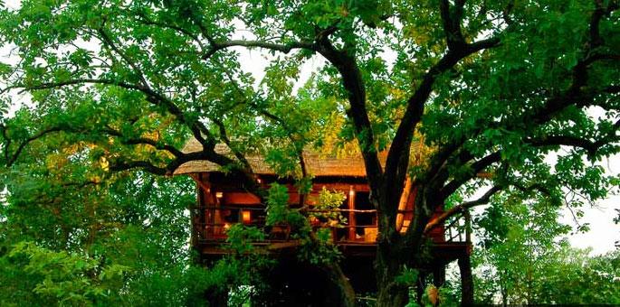 Treehouse-Hideaway,-Bandhav