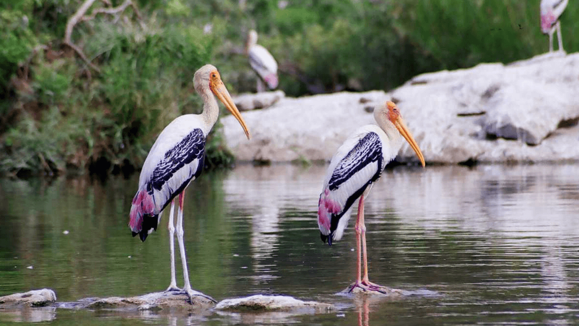 13 Best Places for Wildlife Tours in Karnataka