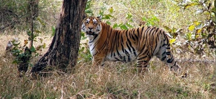 Pecnh Tiger Reserve