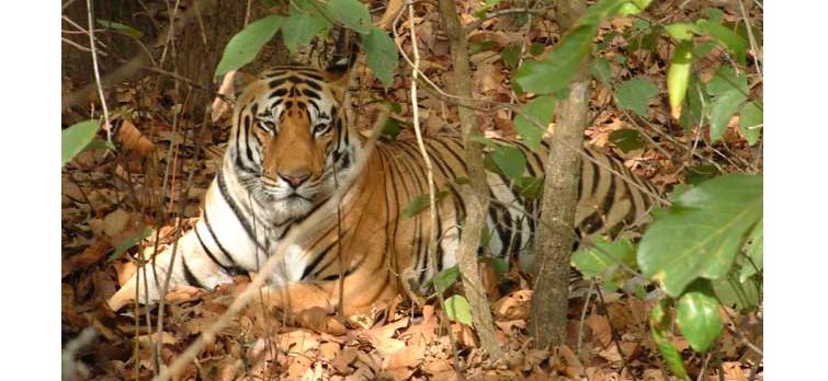 Melghat-Tiger-Reserve