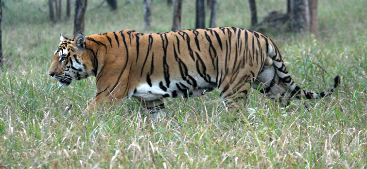 Pench-Tiger-Reserve
