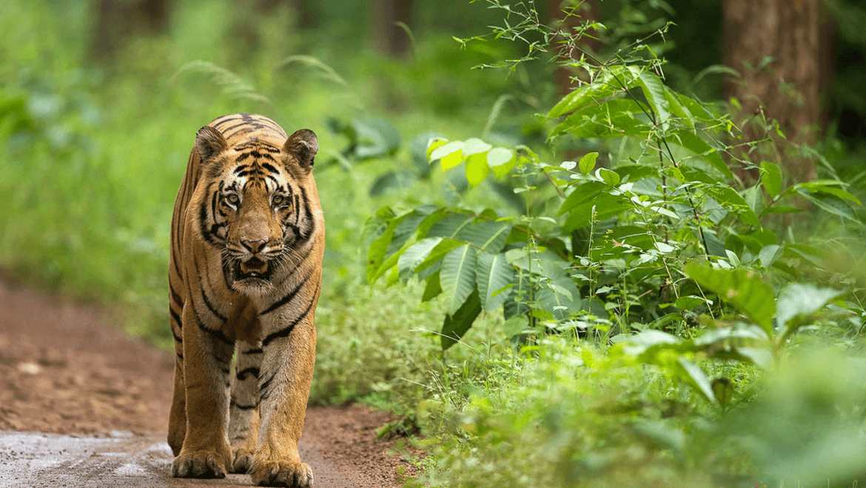 Maharashtra Eco Tourism- National Parks & Wildlife Sanctuaries