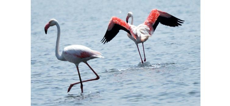Water-Bird-Sanctuary