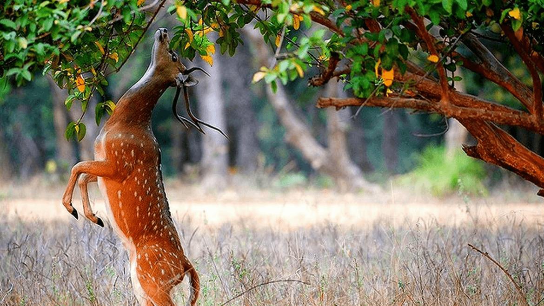130 Bird and 13 Mammal Species Identified in Nanda Devi National Park