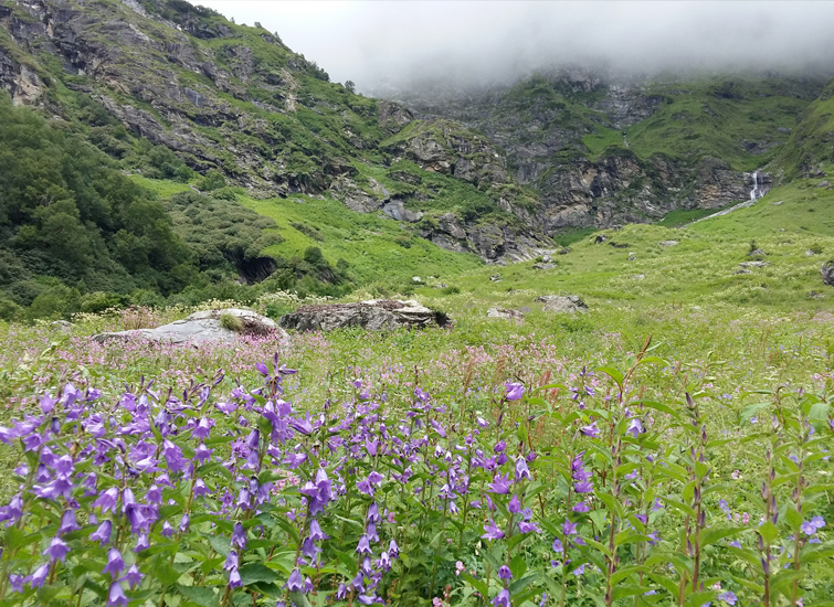 beautiful-vally-of-flowers-national-park