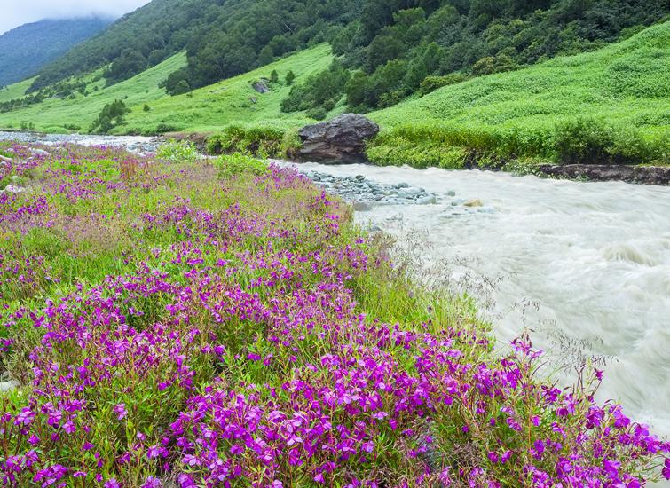valley-of-national-park-uttarakhand