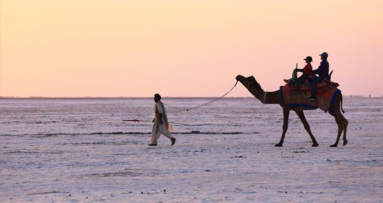Camel Ride Kutch