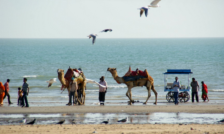Camel Ride on Mandvi Beach