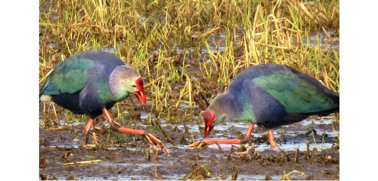 Dr Bhimrao Ambedkar Bird-Sanctuary