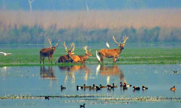 Kishanpur Wildlife Sanctuary