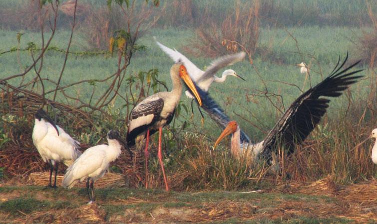 Lakhbahosi Bird Sanctuary