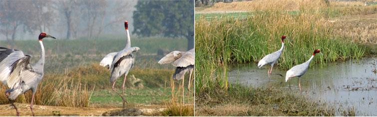 Saman Bird Sanctuary
