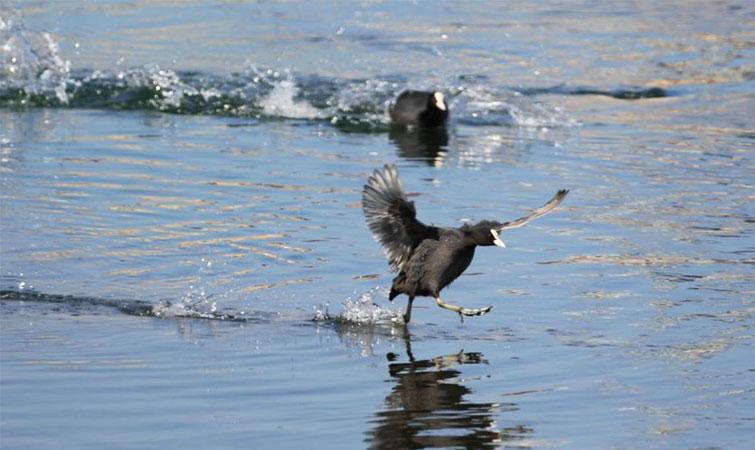 Soor Sarovar Bird Sanctuary