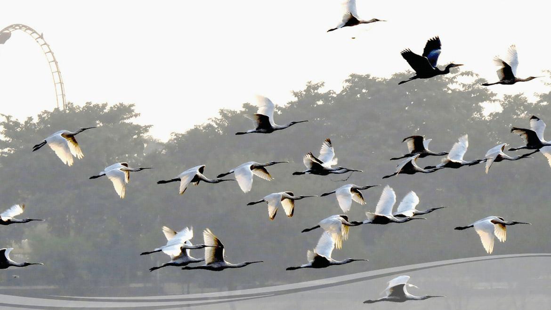 23 Best National Parks, Wildlife and Bird Sanctuaries in Uttar Pradesh