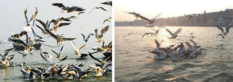 Jaiprakash Narayan Bird Sanctuary