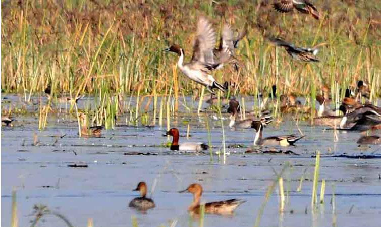 Samaspur Bird-Sanctuary