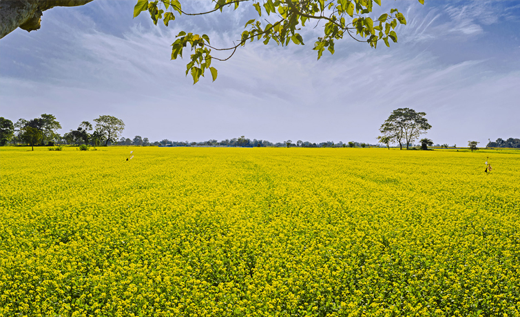 Nalbari Green Field