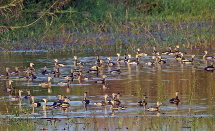 Nameri Birds