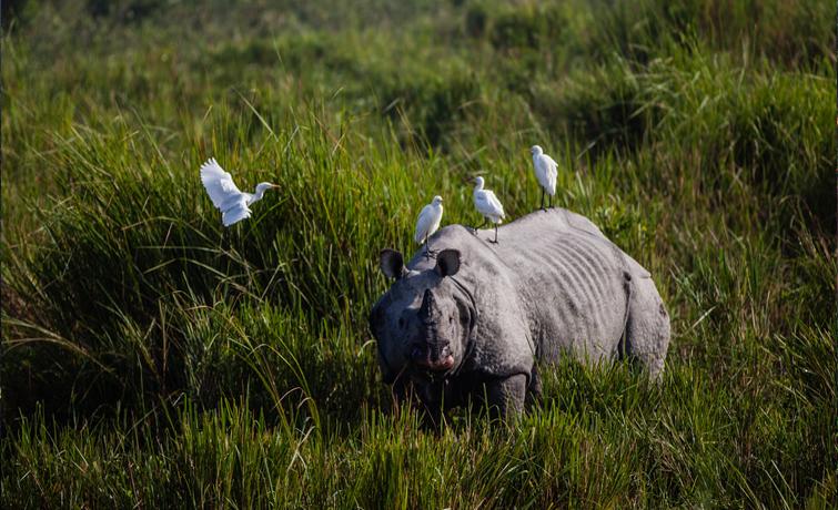 Rhino at Kaziranga National Park