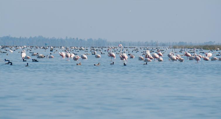 Chilika Lake Bird Sanctuary