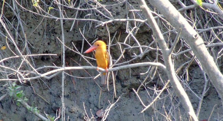 Sundarbans National Park Bird