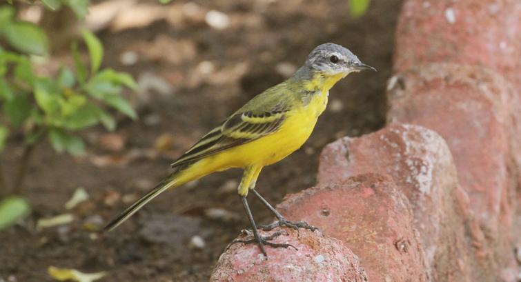 Gir Forest Bird