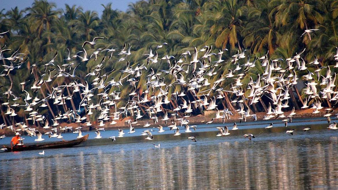 India's Best 20 Sanctuaries & National Parks for Birdwatching Experience
