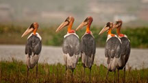 The Bird of West Bengal and Assam
