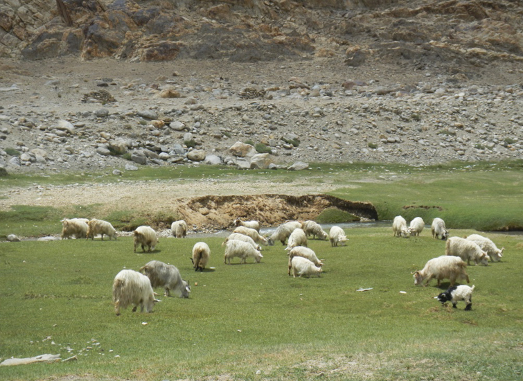 on-the-way-to-pangong-lake-from-Nubra-Valley4
