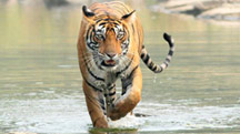 Delhi - Ranthambore Weekend Tour