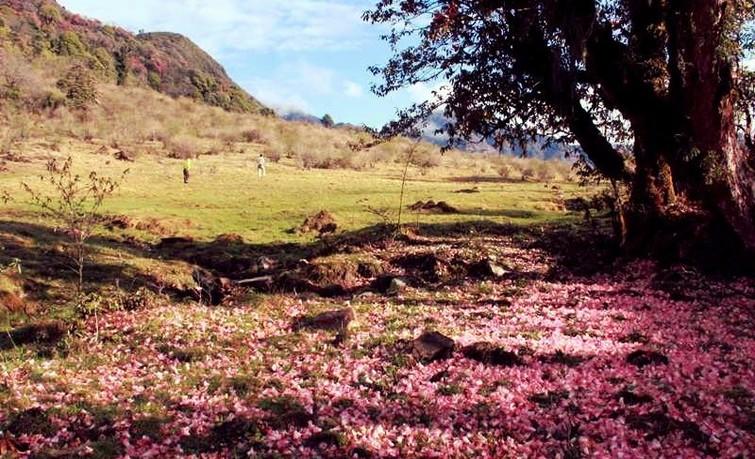 valley of flowers in Varsey