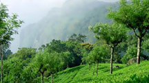 Coonoor Hill Station Weekend Tour