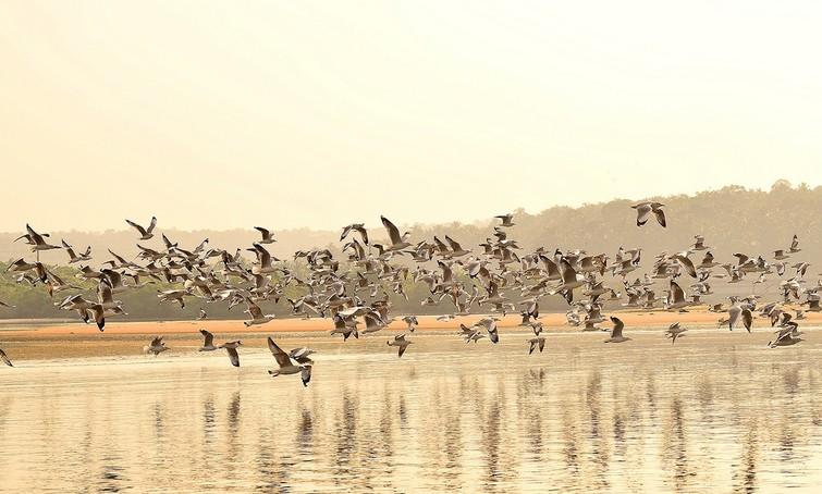 Kadalundi Bird Sanctuary in Malappuram