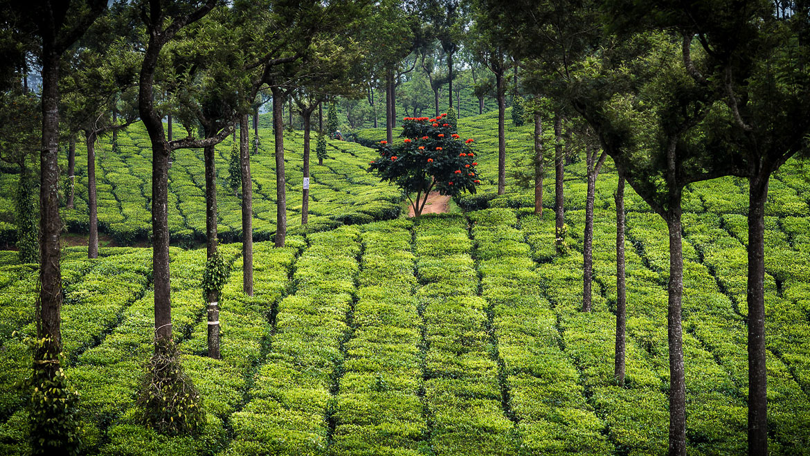 Top 14 Places to Visit and Things to Do in Munnar