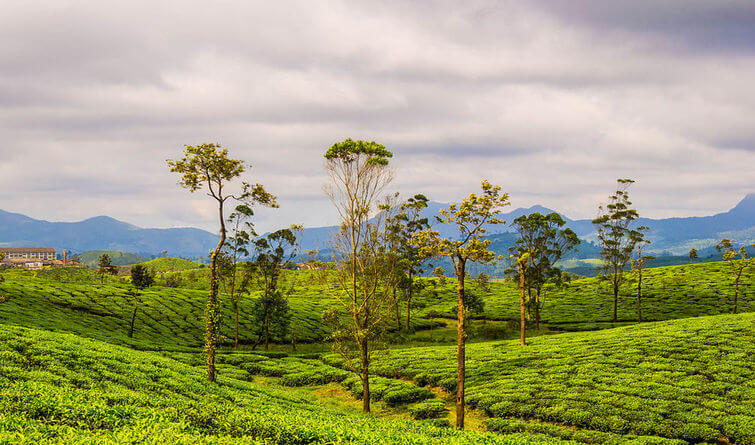 Experience nature at its best in Valparai