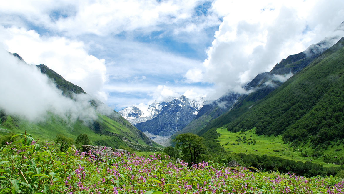 6 Reasons to Visit Valley of Flowers National Park