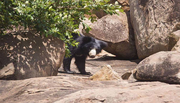 Daroji Sloth Bear Sanctuary, Karnataka
