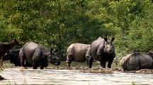 Kaziranga Wildlife Holiday Tour